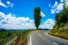 På vägen glömd världshuvudväg, Nya Zeeland 12 royaltyfri fotografi