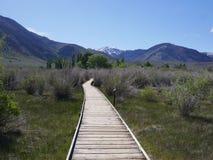 På vår väg till den mono sjön Tufa Royaltyfri Foto