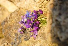 På våren att väcka liv Royaltyfria Bilder