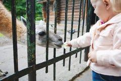 På zoo Royaltyfria Bilder