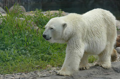 På zooen Arkivbild