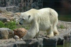 På zooen Arkivfoton
