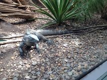 På zooen Fotografering för Bildbyråer