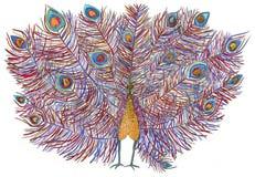 Påfågel härlig svans Dragit med kulöra blyertspennor Fotografering för Bildbyråer