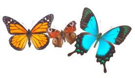 Påfågel-, monark- och havsgräsplan Swallowtail royaltyfria bilder