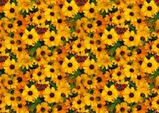 Påfågel på guld- blomningar Arkivbild