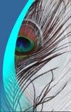 Påfågelbl-fadern med abstrakta vektorblått skuggade bakgrund också vektor för coreldrawillustration Arkivfoto