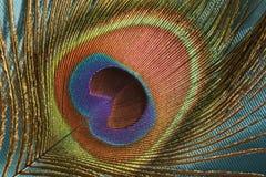 Påfågelfjäder Royaltyfri Foto