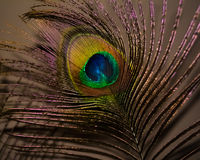 Påfågelfjädercloseup Arkivbilder