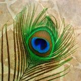 Påfågelfjädercloseup på ljus - brun tegelplattabakgrund Arkivbild