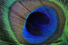 Påfågelfjäderdetalj Arkivbilder
