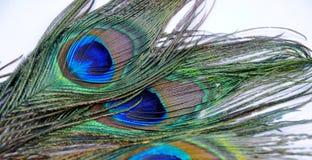 Påfågelfjädrar Arkivfoton