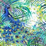 Påfågelillustration Tropisk exotisk skog, gröna sidor, djurliv, illustration för fågelpåfågelvattenfärg vektor illustrationer