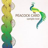 Påfågelkort med hand-drog beståndsdelar Royaltyfria Foton