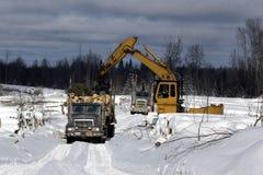 påfylla loggad på spruce trees lastbilen Royaltyfri Fotografi