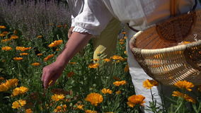 Påfyllning korgen med blommor lager videofilmer