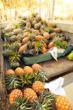 Påfyllning mycket av ananas på marknaden Fotografering för Bildbyråer