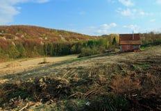 Pågående skogsavverkning Arkivbilder
