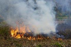 Pågående skogsbrand arkivfoto