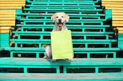 Påse för shopping för härlig golden retrieverhund hållande i teet Royaltyfri Fotografi