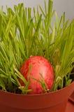 Påskägg i en brun blomkruka Royaltyfri Fotografi
