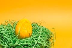 Påskägg i ett easter rede som göras av grönt gräs och gulingbakgrund Fotografering för Bildbyråer
