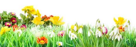 Påsk blommaäng som isoleras, baner Arkivbilder