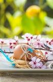 Påsk dekorerat ägg i platta Arkivfoton