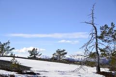 Påsk i berg Royaltyfria Foton