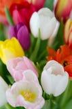 Påsk Tulip Bouquet Fotografering för Bildbyråer