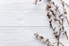 Påskbegreppet, förgrena sig ris på en träbakgrund Arkivfoto