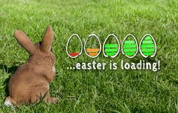 Påsken laddar begrepp med ägg och den easter kaninen på äng royaltyfria bilder