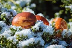 Påskferiegarnering på våren Ägget ligger på snö Arkivfoto