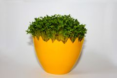 Påskgarnering med gröna växter royaltyfri bild