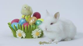 Påskkanin och fågelunge med kulöra ägg på vit bakgrund stock video