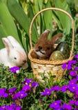 Påskkorg med kaniner Arkivbild