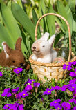 Påskkorg med kaniner Arkivfoton