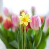 Påsklilja i blom Royaltyfria Foton