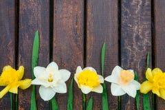 Påsklilja på mörk träbakgrund vit yellow för pingstlilja greeting lyckligt nytt år för 2007 kort kopiera avstånd Top beskådar rr Royaltyfri Foto