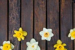 Påsklilja på mörk träbakgrund vit yellow för pingstlilja greeting lyckligt nytt år för 2007 kort kopiera avstånd Top beskådar rr Arkivfoton