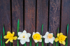 Påsklilja på mörk träbakgrund vit yellow för pingstlilja greeting lyckligt nytt år för 2007 kort kopiera avstånd Top beskådar Royaltyfria Foton