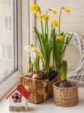 Påskliljor och hyacinter i korgar Arkivbilder