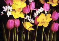 Påskliljor och tulpan på svart kanfasbakgrund Fotografering för Bildbyråer