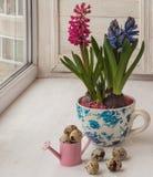 Påskordning av hyacinter i tappningkoppar Royaltyfri Fotografi