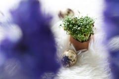 Påsksammansättning med vaktelägg och kryddkrasse och hyacint arkivfoto