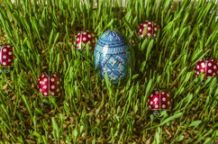 Påskträmålat blått ägg bland nyckelpigor på spirat korn Arkivbilder