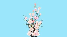 Påskvårfilialer av blomningen Sakura With Pink Cherry Flowers på genomskinlig bakgrund för hälsa eller bröllopkort eller Commer royaltyfri illustrationer