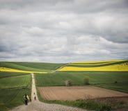 Pèlerins sur la route vers Santiago entre les champs photos stock