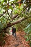 Père et fille trimardant dans la forêt colorée de chute Image stock