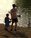 Père et fils à l'étang de canard photos stock